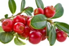 Ecofruct lingonberries